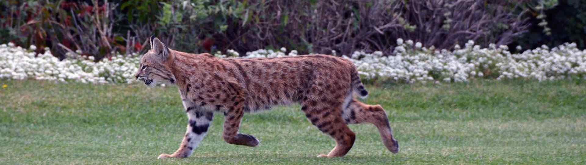 Bobcat slider